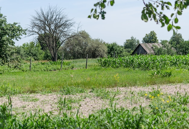 Old farm with tall grass