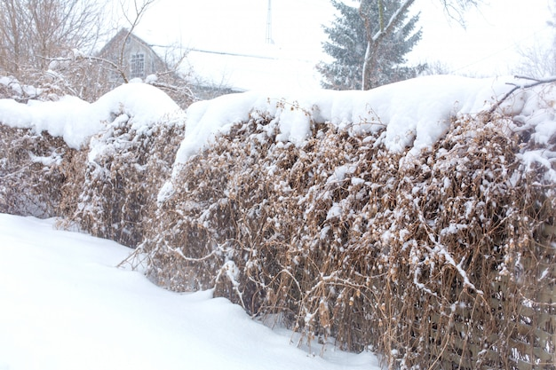 Old fence of wooden boards with snow