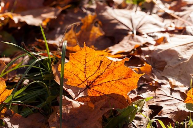 Старая листва лиственных деревьев, лежащих на земле в осенний сезон