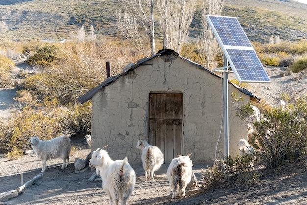 ソーラーパネルと山羊が周りにある古いガウチョの家。