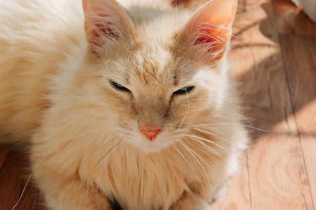 태양 아래 교활한 총구를 가진 늙은 생강 고양이