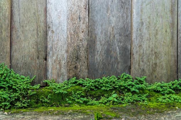 緑の苔テクスチャ背景と古い灰色の石の壁