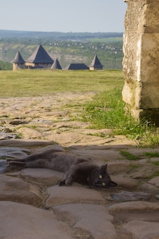 An old gray stray cat lies on the stone pavement towers of the ancient fortress are visible i