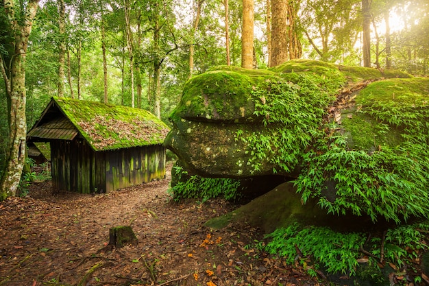 Old green hut wooden political and military school at phuhinrongkla national park nakhon