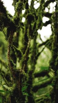 오래된 성장 온대 우림, 그루지야 정글 - 이끼 속의 나무