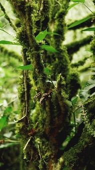 Old growth temperate rainforest, georgian jungle - trees in the moss