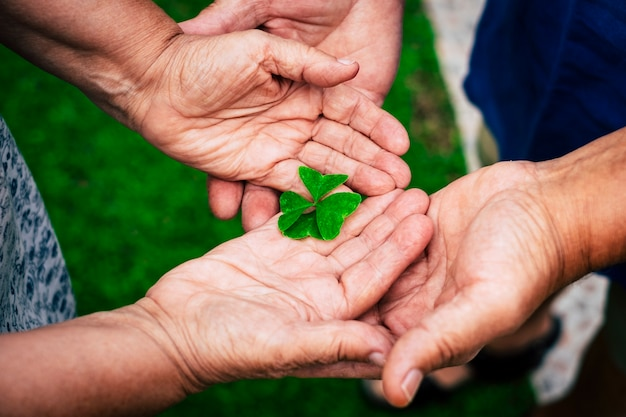 Old hands people holding with love and taking little quartifoil for hope and luck concept