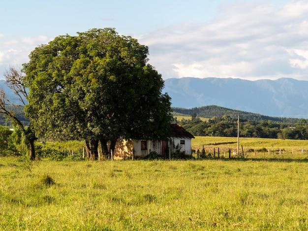 큰 나무 그늘에 있는 시골의 오래된 집