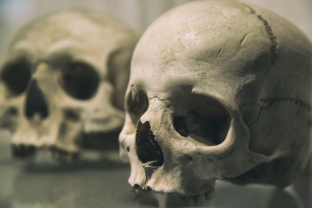 Old human skulls close up
