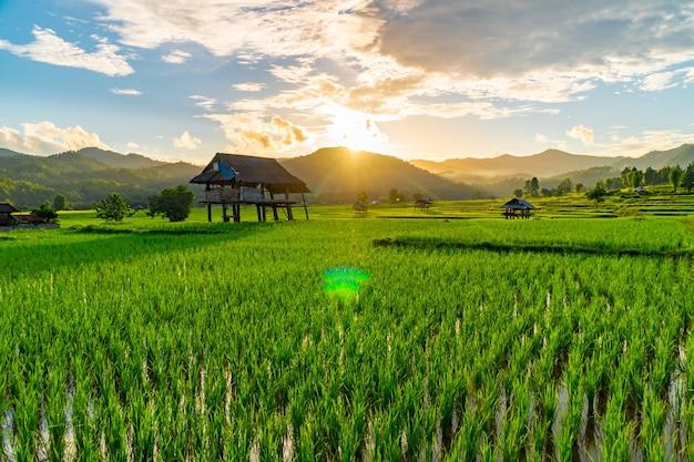 タイの夕焼け空に棚田のある緑豊かな農地の真ん中にある古い小屋