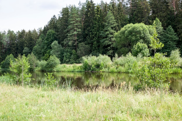睡蓮や他の植物が育つ古い湖、立っている睡蓮と睡蓮のある湖の夏の時間