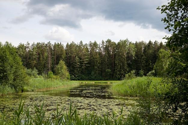 Старое озеро с растущими кувшинками