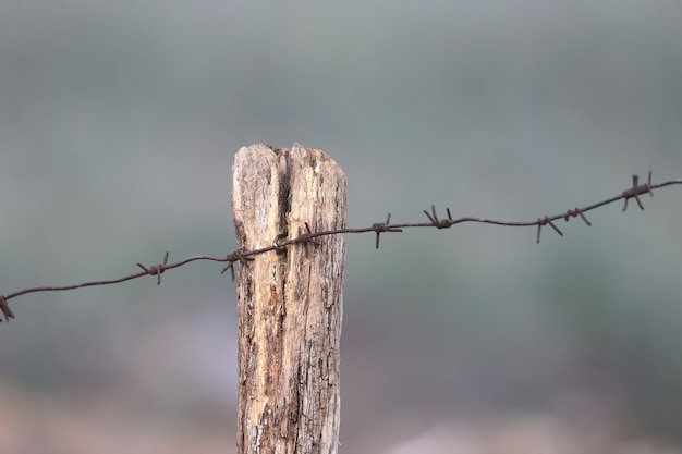 ぼやけた背景に垂直に撮影された亀裂と有刺鉄線のある古い丸太
