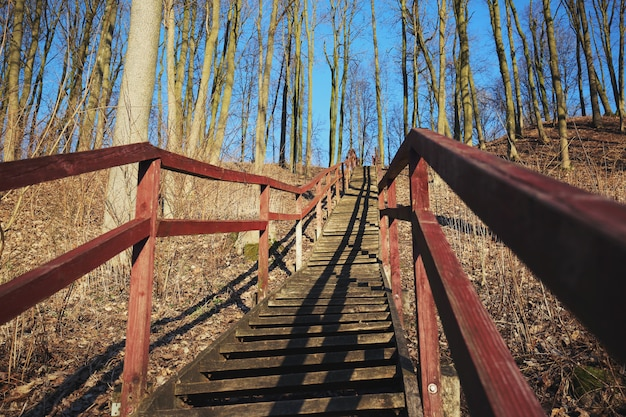 Old long forest stairs