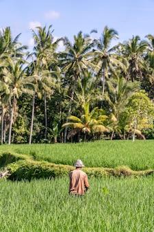 녹색 쌀 농장에서 일하는 밀짚모자를 쓴 늙은 남성 농부. 인도네시아 발리 우붓의 화창한 날 푸른 논과 노인이 있는 풍경