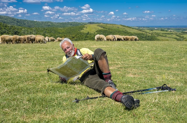 Vecchio escursionista maschio sdraiato in un prato e guardando una mappa con pecore sullo sfondo