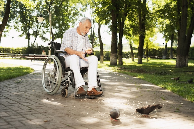 Old man feeds pigeons. disabled assistance.