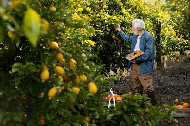 그의 오렌지 나무 옆에 서있는 노인