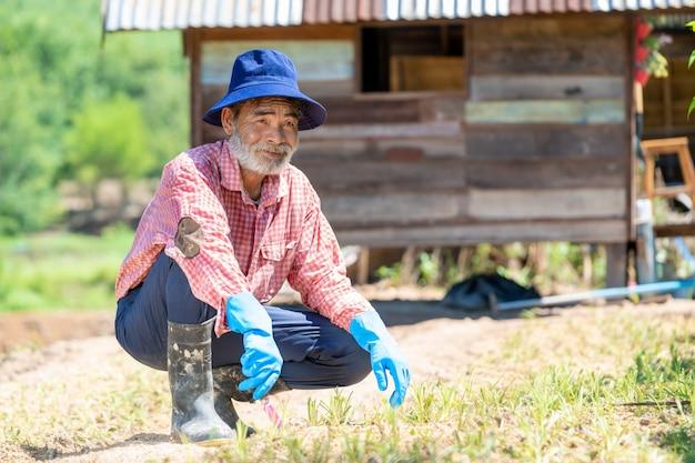 裏庭の庭で働く園芸工具を持つ老人。