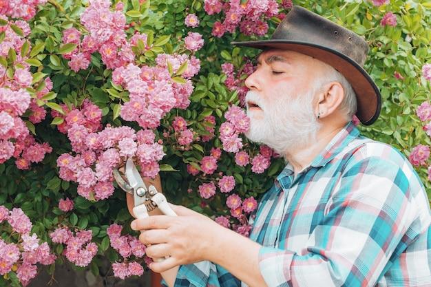 バラの背景の上の庭で働く老人
