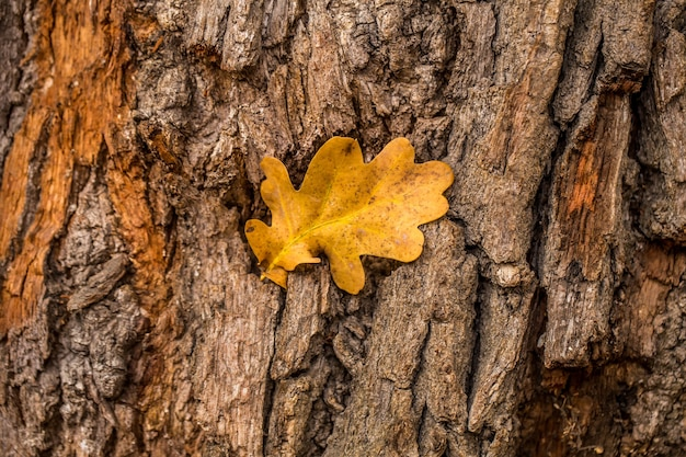 Старое натуральное дерево и желтый лист