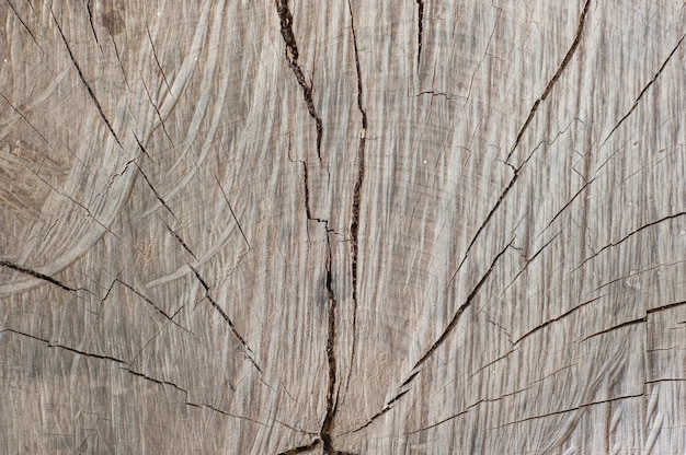 Old natural wood texture of cut tree trunk