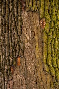 古い天然木の質感