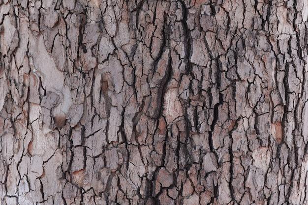 古いオークの樹皮のテクスチャーのクローズアップ。自然の背景。