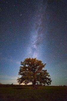 은하수 아래의 오래된 떡갈나무, 야간 촬영