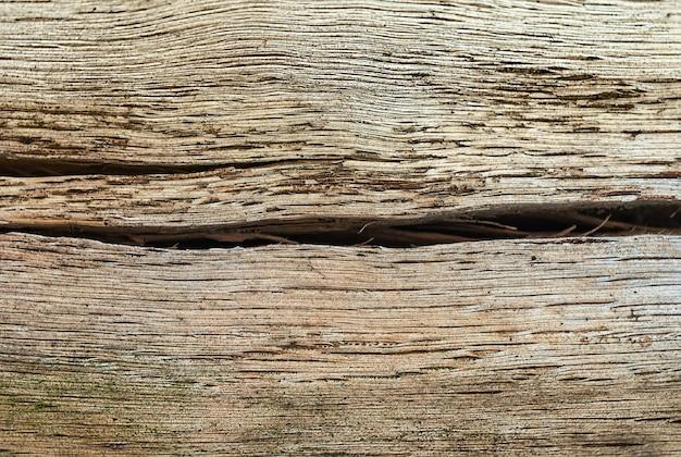 亀裂のある古いオークの幹自然な背景とテクスチャ
