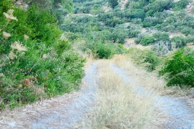 Старая заросшая дорога в горах