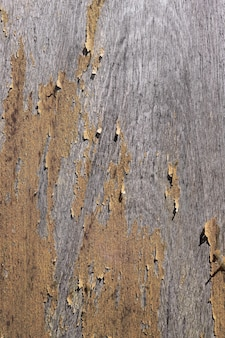 Old plank with texture background details of natural.
