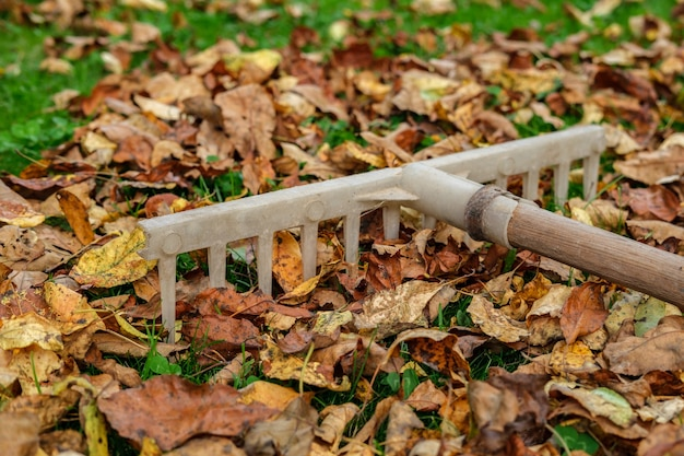 An old plastic rake with a wooden handle lies on a lawn with green grass strewn with yellowed and withered autumn leaves.