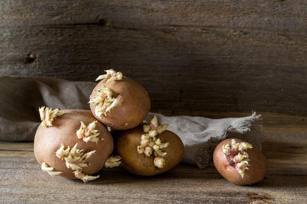 Старые картофельные луковицы с молодыми ростками на деревянном столе, готовом для посадки