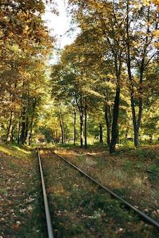 落ち葉のある秋の風景の古い線路。秋の森の鉄道。
