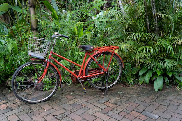 Old red bicycle in garden