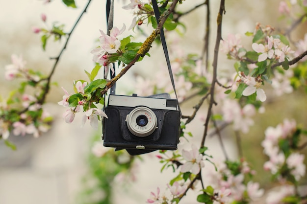 Old retro the camera hangs on an apple-tree in sunny spring day