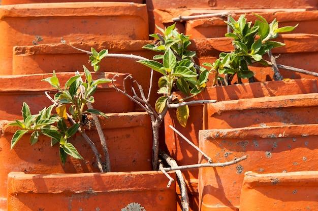 Старая черепица с растительностью