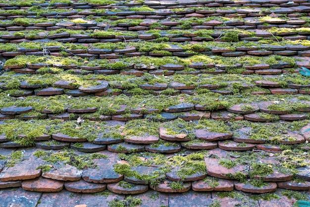 緑の苔を背景に生い茂った古い屋根瓦