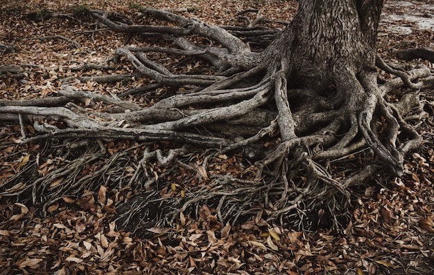 Old roots and dry leaves.
