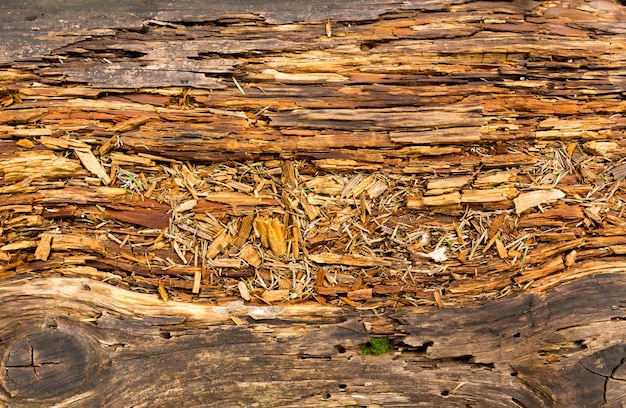 古い腐った木