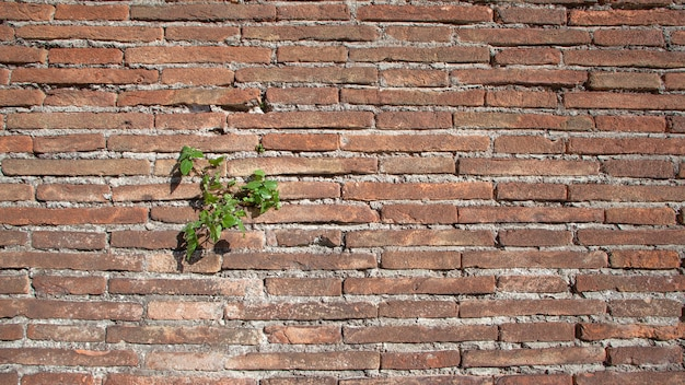 식물 질감 자연 배경으로 오래 된 거친 벽돌