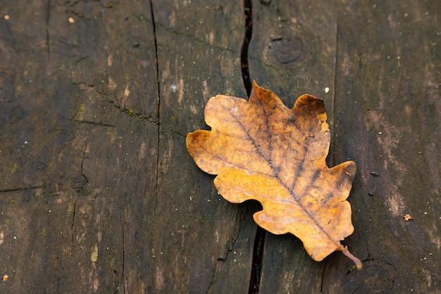 古いラフで自然な質感のオークボード、黄色のオークの葉、クローズアップ。
