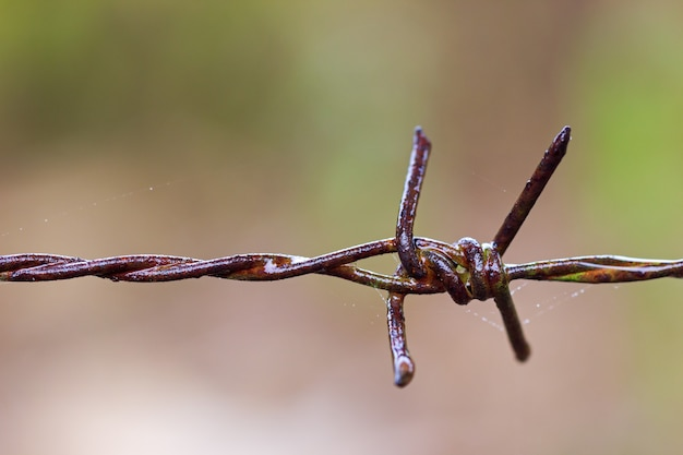 Old rusty barbed wire fence and spider web were wet with rain.