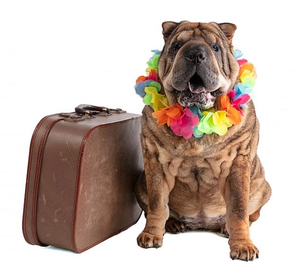 分離されたスーツケースを持つ古いシャーペイ
