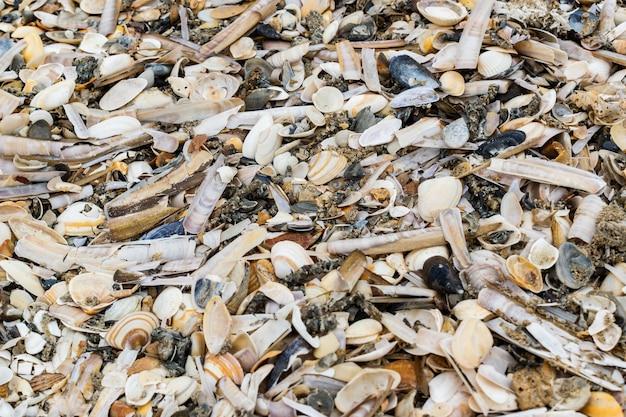 Старые ракушки, мидии и моллюски