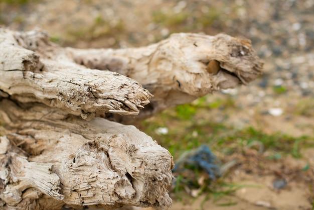 海のそばの芝生の上に横たわる古いひっかき。