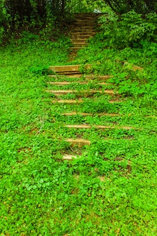 An old staircase in the forest covered with green grass