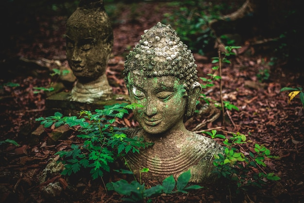 チェンマイタイ、ウムン寺院で去った地面にある仏陀の古い像。