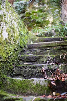 Old stone stairs covered with moss close up
